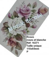Roses rose et blanche