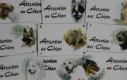 2. Attention au chien + décor 10x15cm