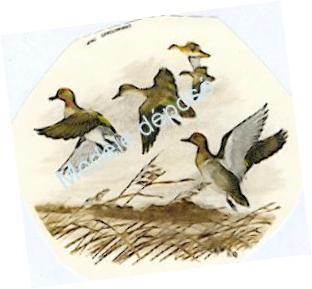 Envol de canards